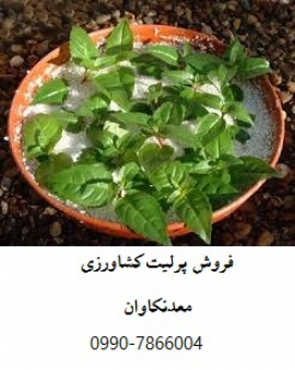فروش پرلیت کشاورزی و باغبانی معدن کاوان