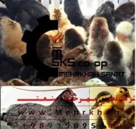 يکي از بزرگترين توليد کنندگان مجموعه محصولات طيور در ايران