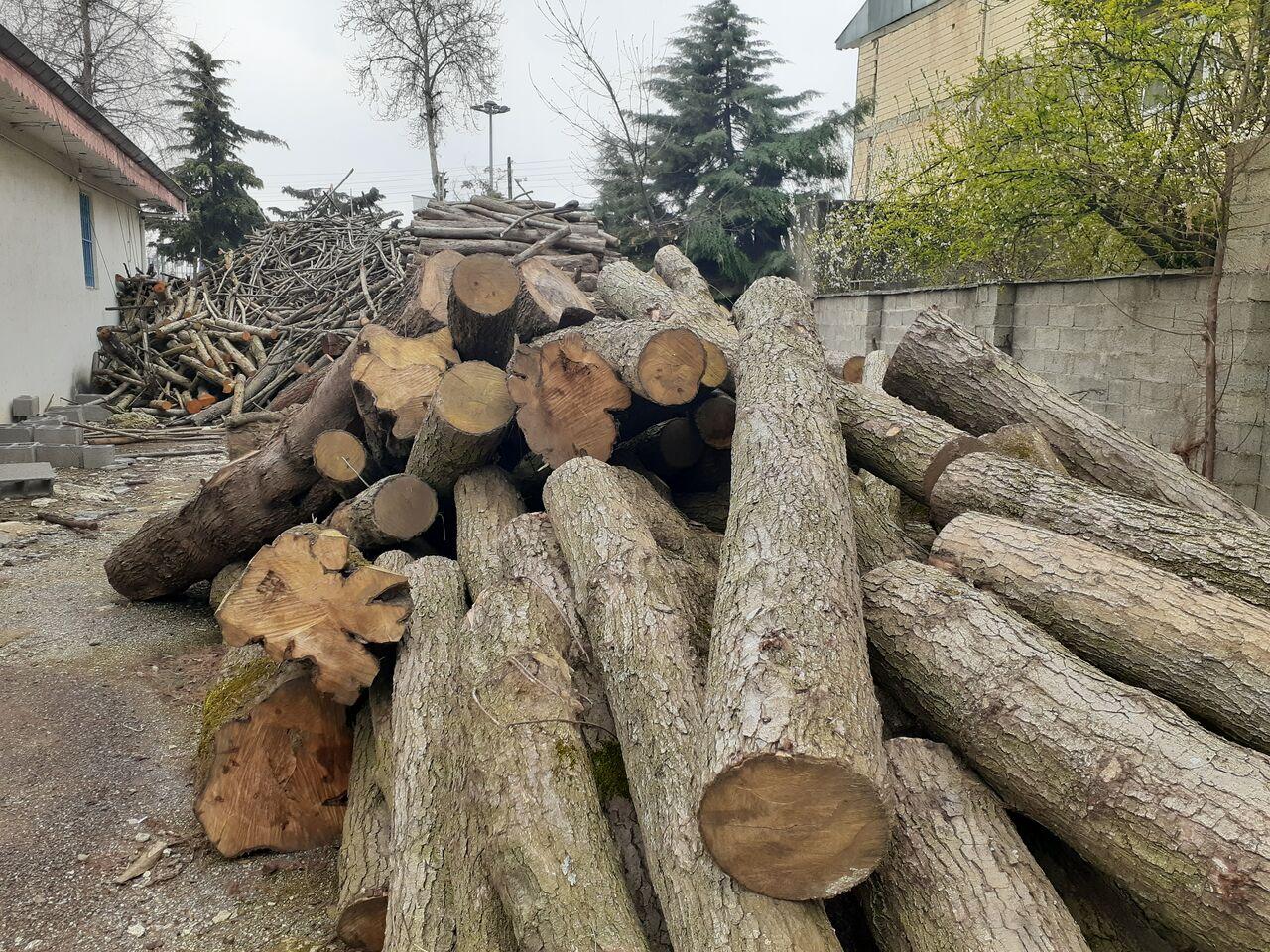 کشف و ضبط ۱۰ تن چوب قاچاق در مناطق حفاظت شده صومعه سرا